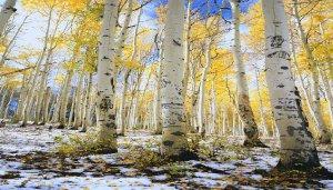 krajobrazy-lasy-2560-1920-1304